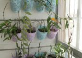 A good way to grow dendrobium on the balcony